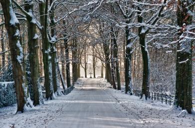 Winter_Wonderland_(about_a_year_ago_.....)_(6529979645).jpg