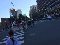 Horses Everywhere!
